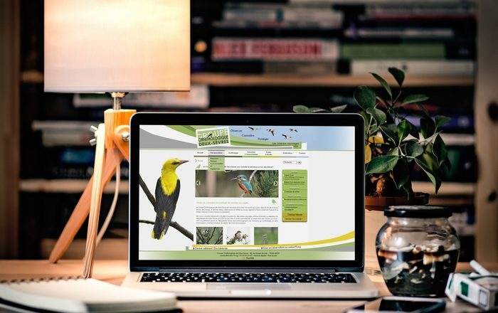 Site Groupe Ornithologique 79 - Alice Belain Com